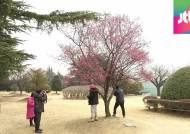 [날씨] 주말 봄기운 물씬…서울 낮 최고 13도