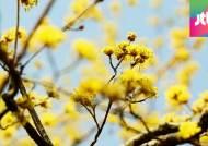 마지막 '꽃샘추위' 뒤 고온현상…올봄, 평년보다 덥다