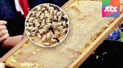 생산능력 30% 높인 꿀벌 탄생…12년 연구 끝에 개발