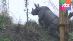 '여긴 어디?' 네팔 도심에서 코뿔소 난동…7명 사상