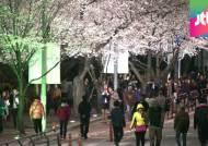 [밀착카메라] '하얀 벚꽃의 터널' 장관…여의도 '북적'