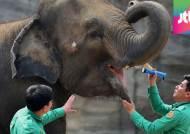 코끼리는 발, 기린은 혀…동물들의 봄맞이 건강검진