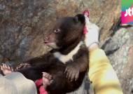 겨울잠서 깬 지리산 반달가슴곰, 아기 곰 5마리 출산