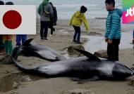 일본 동부 해안서 돌고래 집단폐사…대지진 전조?