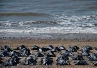 영국 브라이튼 해변에 시체 가방 200개…난민 대책?