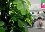 사무실 속 화분, 업무 효율 '쑥'…생체리듬에도 영향