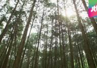 """""""숲속을 걸어요~"""" '연둣빛 신록'과 함께하는 늦봄 산책길"""