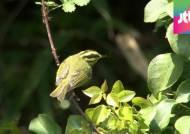흑산도서 미기록 철새 첫 발견…기후변화 따른 이동?