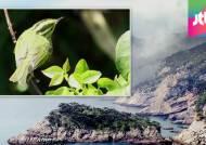흑산도에서 국내 미기록 철새 발견…기후변화 영향?