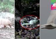 흰 오소리·흰 괭이갈매기…'백색증' 동물 잇따라 발견