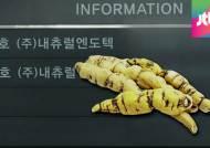 검찰, 내츄럴엔도텍 공장에서 '중국산 백수오' 발견