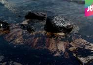 기름으로 뒤덮힌 샌타바버라 해안…생태계 파괴 우려