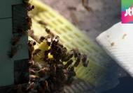 중고차단지, 꿀벌 배설물에 골치…양봉업자와 갈등
