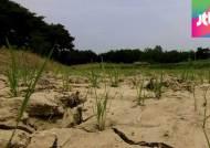 [밀착카메라] 곳곳 쩍쩍…최악 가뭄에 처참한 소양호