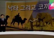 [앵커브리핑] 메르스 공포 이념 프레임…'낙타 그리고 코끼리'
