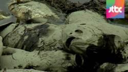 [밀착카메라] 목 타는 아우성…최악 가뭄에 동물들도 고통