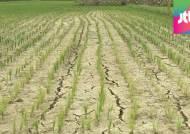 최악의 가뭄에 말라가는 한반도…언제쯤 벗어날까?