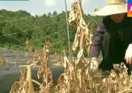 여전히 목타는 한반도…가뭄 피해 남부지방으로 확산