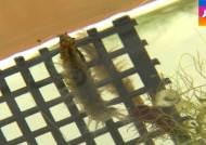 모기 유충 먹는 '천적 곤충' 찾았다