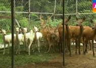 3년간 200마리 넘게…서울대공원이 판 동물들 어디로
