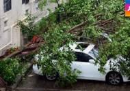뿌리째 뽑힌 나무가 차량 덮쳐…태풍 '고니' 피해 속출