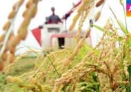 벼농사 풍년 예상돼지만…쌀값 하락에 농민들 울상