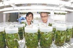 'GMO 논쟁' 식탁위 공포로소비자는 피곤하다