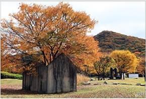 느티나무 집