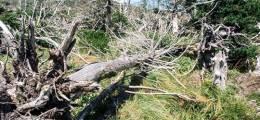 360도로 본 기후재앙 충격 장면 한라산 크리스마스 나무의 죽음